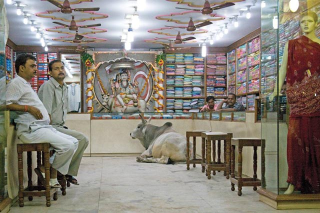 Cow in tailoring shop