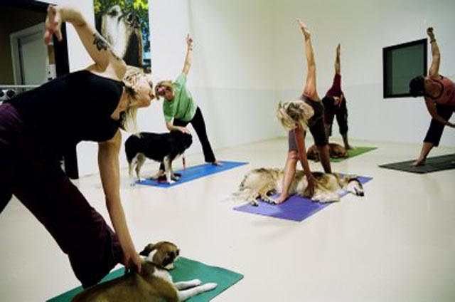 A doga class in progress