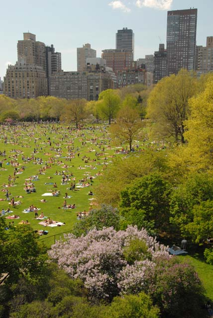Central Park in New York City provides greenery for city dwellers