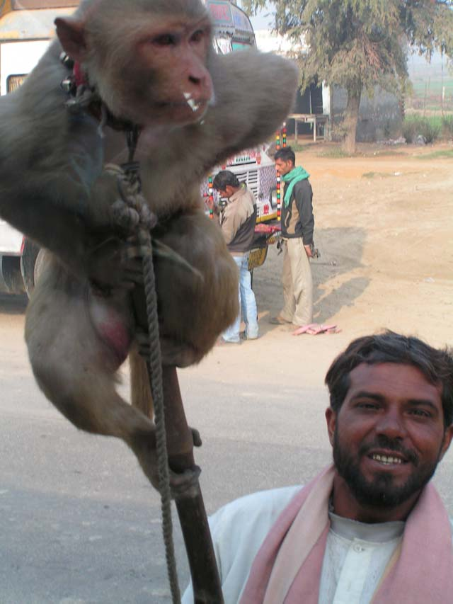 India blog - No Monkey business on the road to Agra