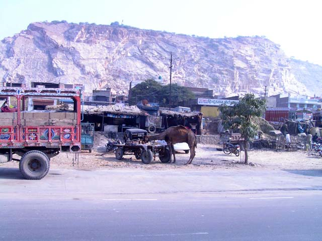 In the India blog, a look at camels in Rajasthan, India