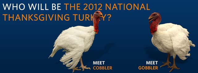 National Thanksgiving Turkey at the White House