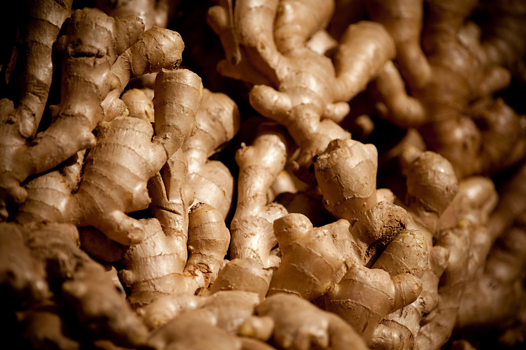 A Sea of Ginger - Creative Commons- Katy Bird